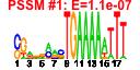 output/cmonkey_4.1.5_sce/htmls/cluster136_pssm1.png